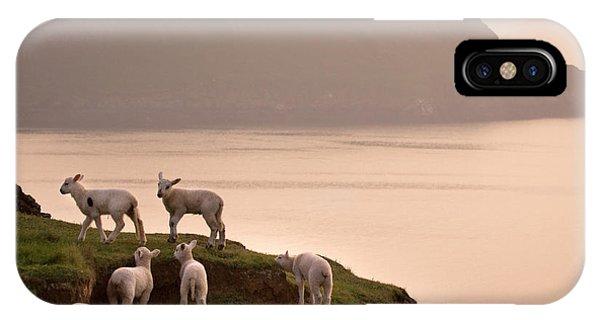 Sheep iPhone X / XS Case - Worms Head by Angel Ciesniarska