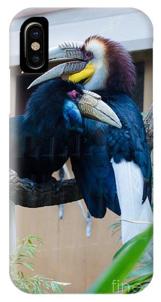 Wreathed Hornbills IPhone Case