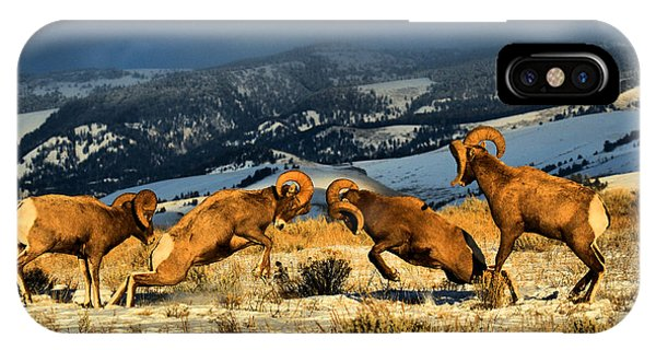 Wyoming Bighorn Brawl IPhone Case