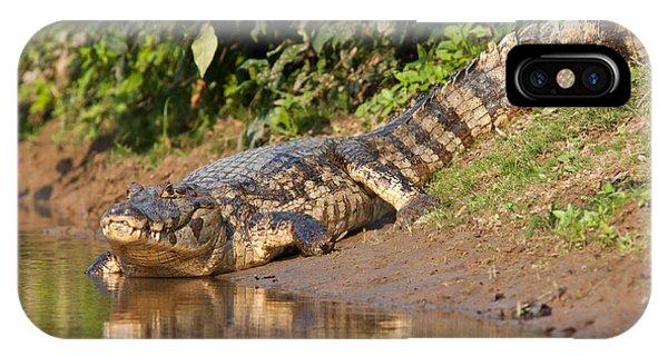 Alligator Crawling Into Yakuma River IPhone Case