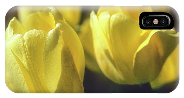 IPhone Case featuring the photograph Yelllow Tulip by John Brink