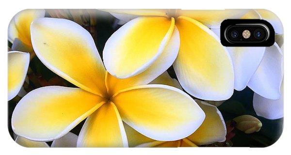 Yellow And White Plumeria IPhone Case