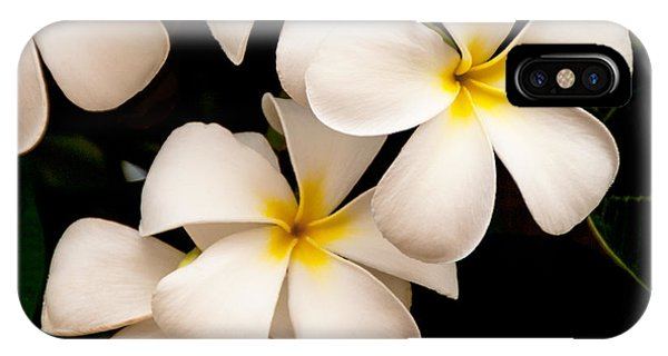 Nature Still Life iPhone Case - Yellow And White Plumeria by Brian Harig