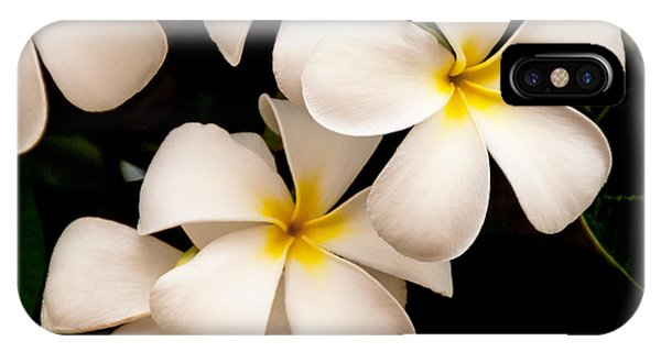 Yellow And White Plumeria IPhone Case
