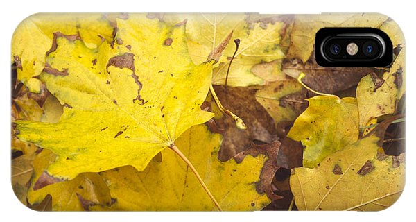 Yellow Autumn Leaves IPhone Case