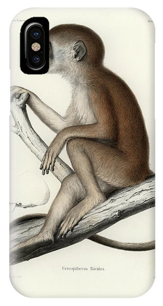IPhone Case featuring the drawing Yellow Baboon, Papio Cynocephalus by J D L Franz Wagner
