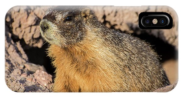Groundhog iPhone Case - Yellow-bellied Marmot - Capitol Reef National Park by Gary Whitton