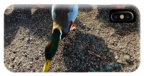 IPhone Case featuring the photograph yellow Billed Duck Feeding by Roger Bester