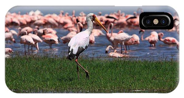 Yellow Billed Stork IPhone Case