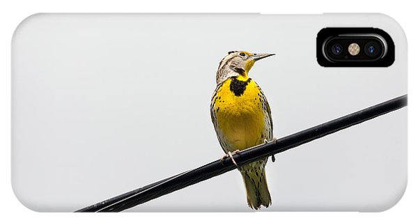 Meadowlark iPhone Case - Yellow Bird by Rebecca Cozart