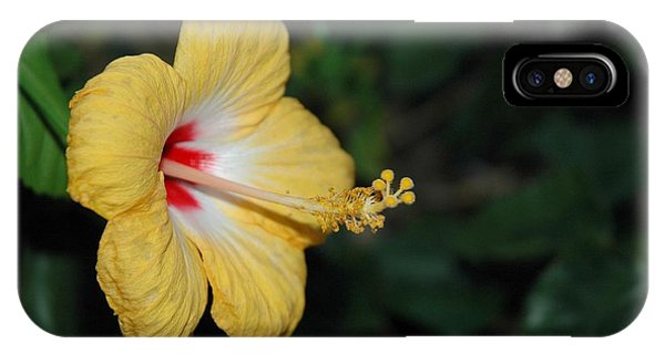 iPhone Case - Yellow Bloom by Althea Sumpter