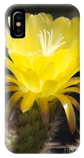 Yellow Cactus Flower IPhone Case