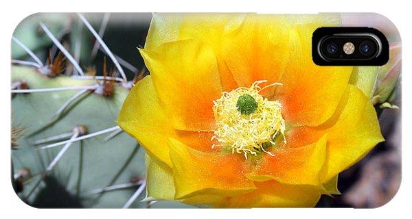 Yellow Cactus Flower IPhone Case