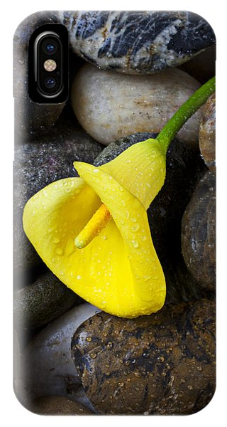 Horticulture iPhone Case - Yellow Calla Lily On Rocks by Garry Gay