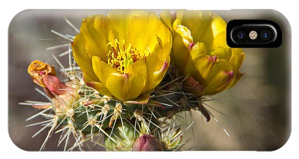 iPhone Case - Yellow Cholla Cactus Flower by Kelly Holm