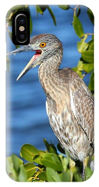 Yellow-crowned Night Heron IPhone Case