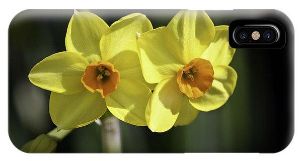Yellow Daffodils 2 IPhone Case