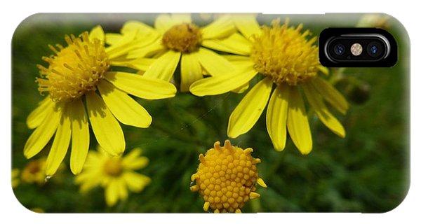 Yellow Daisies 2 IPhone Case