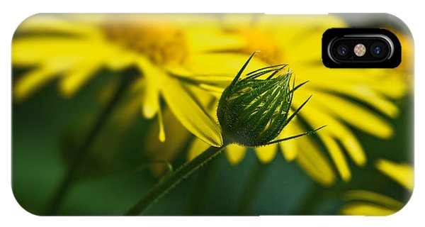 Yellow Daisy Bud IPhone Case