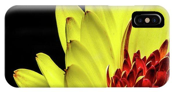 Yellow Daisy Peeking IPhone Case