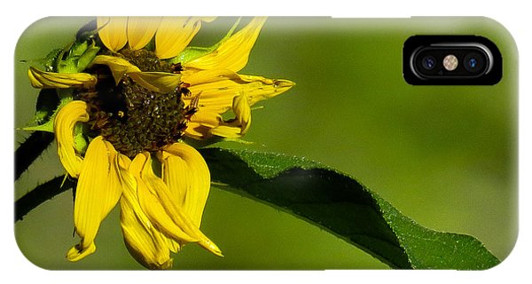 Yellow Flower 1 IPhone Case