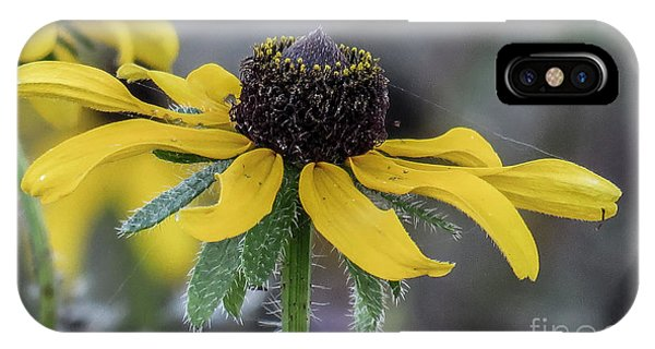 Yellow Flower 6 IPhone Case