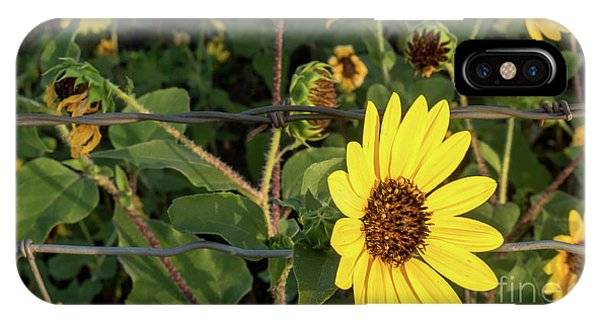 Yellow Flower Escaping From A Barb Wire Fence IPhone Case