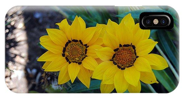 Gazania Rigens - Treasure Flower IPhone Case