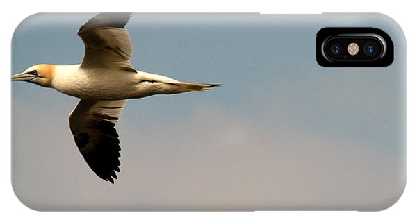 Yellow Headed Gull In Flight IPhone Case