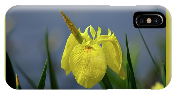 Yellow Iris IPhone Case