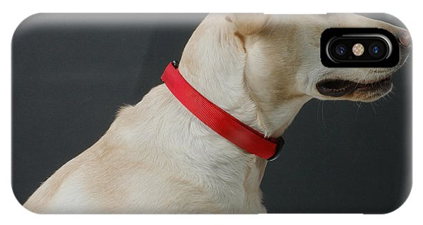 Yellow Lab iPhone Case - Yellow Lab by Jerry McElroy