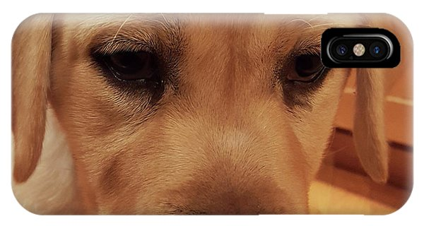 Yellow Lab iPhone Case - Yellow Labrador Retriever Cute Puppy Face by Crista Forest
