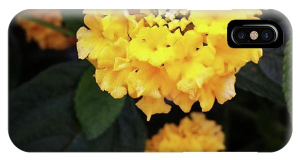 IPhone Case featuring the photograph Yellow Lantanas Along The Scenic Drive by Mr Photojimsf