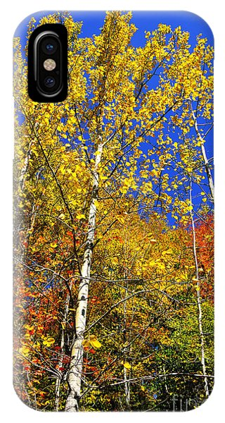Yellow Leaves Blue Sky IPhone Case
