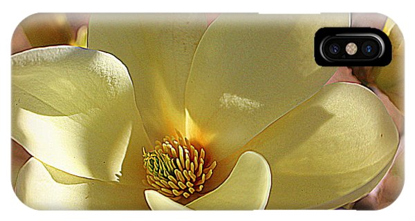 Yellow Magnolia In Full Bloom IPhone Case
