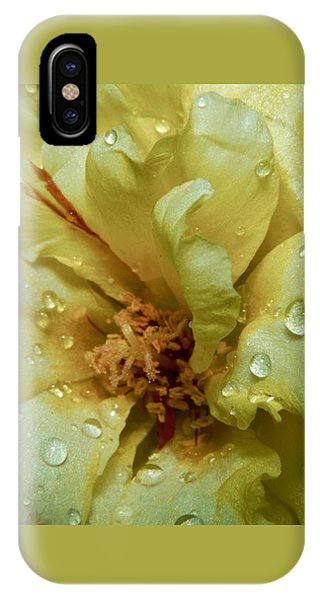 Yellow Moss Rose 1 IPhone Case