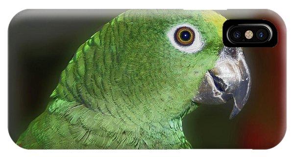 Yellow Naped Amazon Parrot IPhone Case