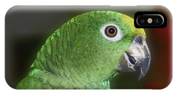 Yellow Naped Amazon Parrot IPhone Case