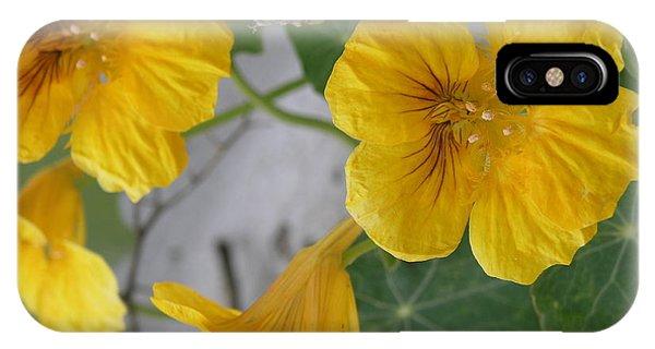 Yellow Nasturtium IPhone Case