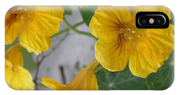 Yellow Nasturtium IPhone Case