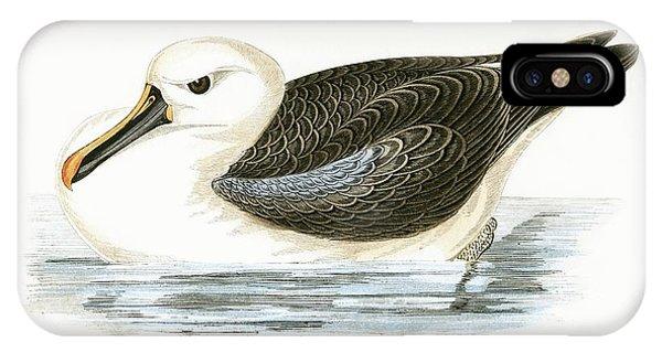 Albatross iPhone Case - Yellow Nosed Albatross by English School