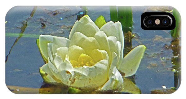 Yellow Nymphaea Alba Damselfy IPhone Case