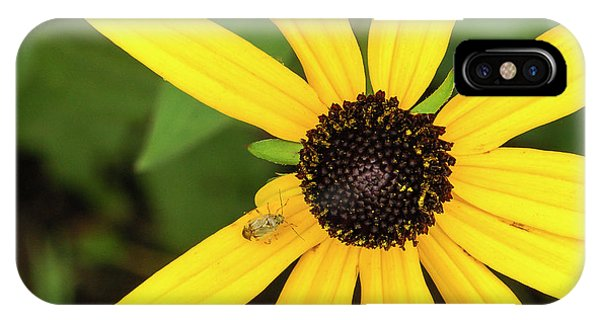 Yellow Petaled Flower With Bug IPhone Case