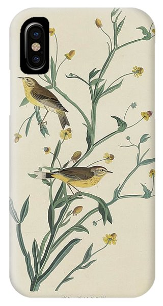 Yellow Red-poll Warbler IPhone Case