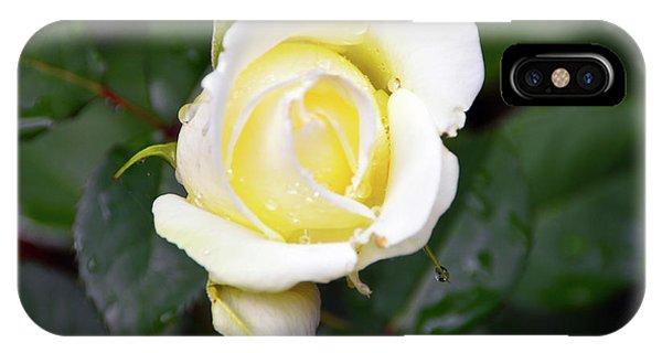Yellow Rose 1 IPhone Case