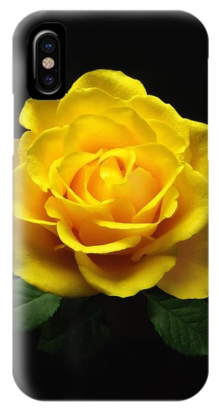 Yellow Rose 6 IPhone Case