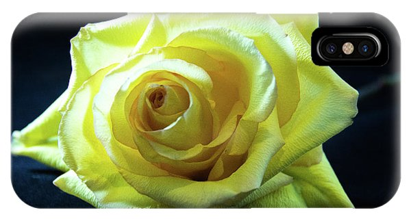 Yellow Rose-7 IPhone Case