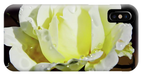Yellow Rose Dew Drops IPhone Case