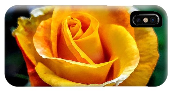 Yellow Rose IPhone Case