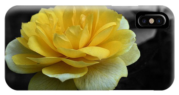 Yellow Rose In Bloom IPhone Case